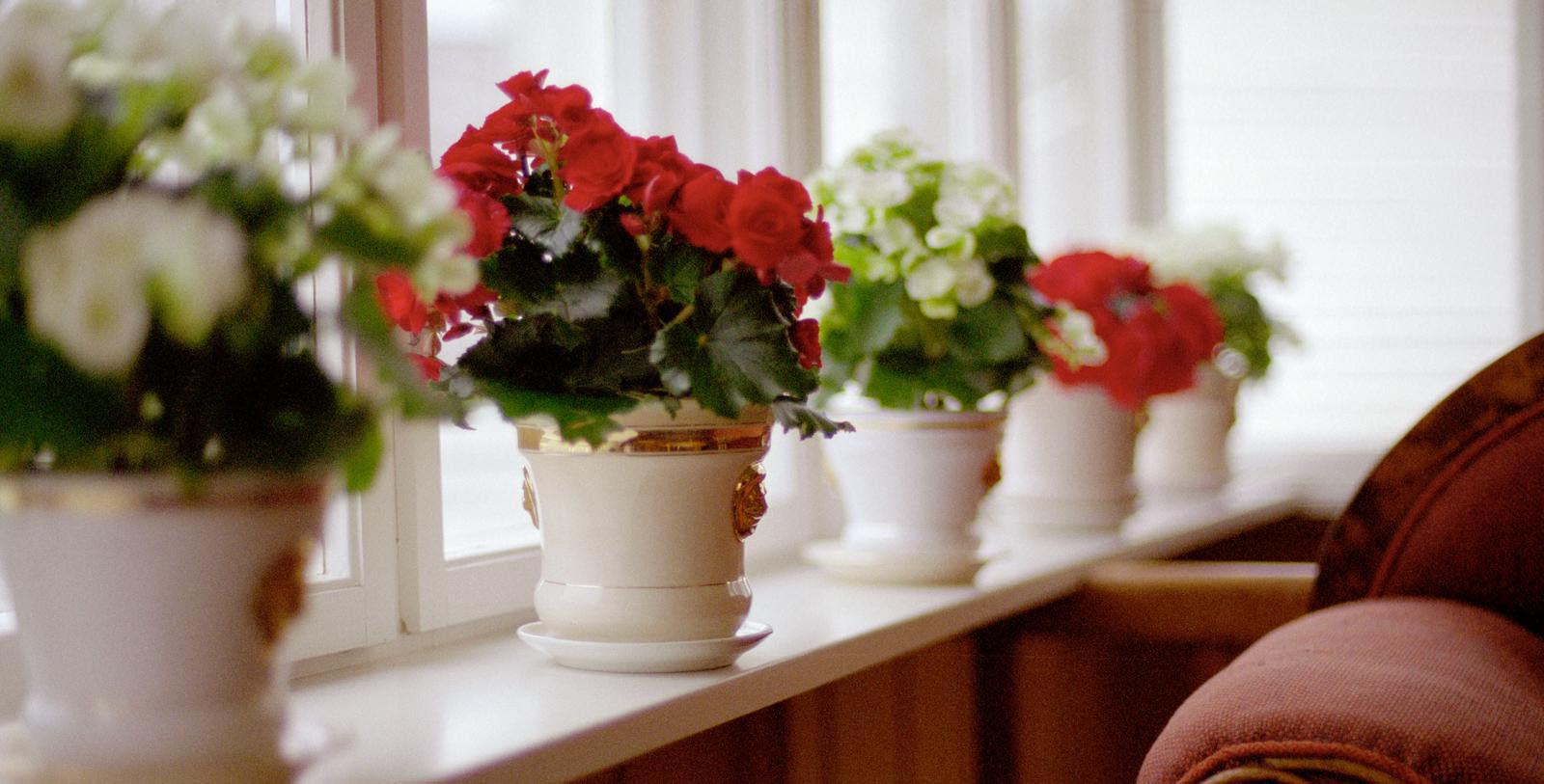 Image of Flower Pots on Windowsill at Utne Hotel, 1722, Member of Historic Hotels Worldwide, in Utne, Norway, Experience