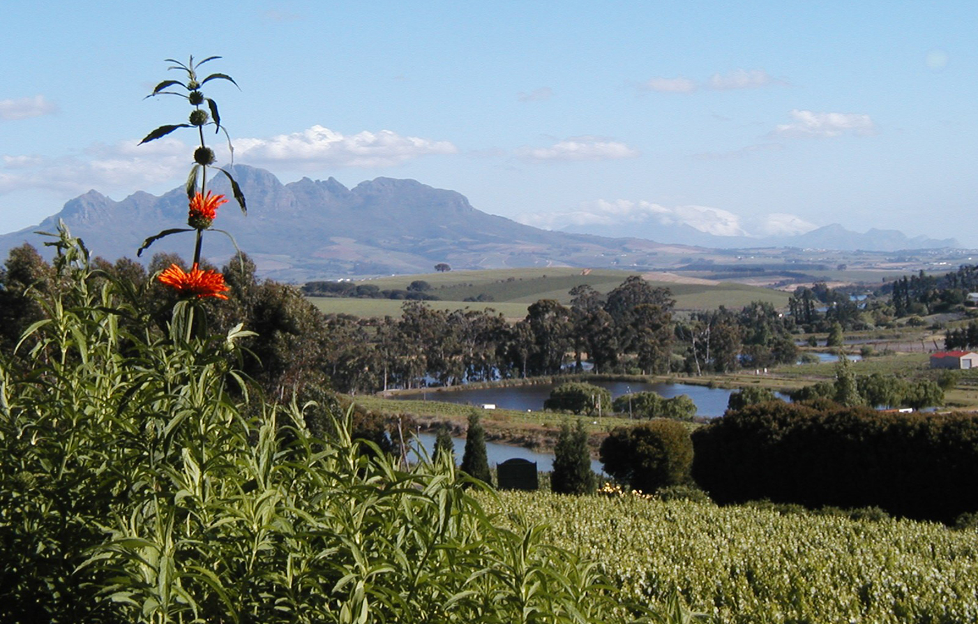 Customer Reviews:      The Devon Valley Hotel  in Stellenbosch