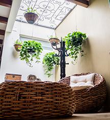 Event Calendar:      Hotel San Pietro  in Tlaquepaque