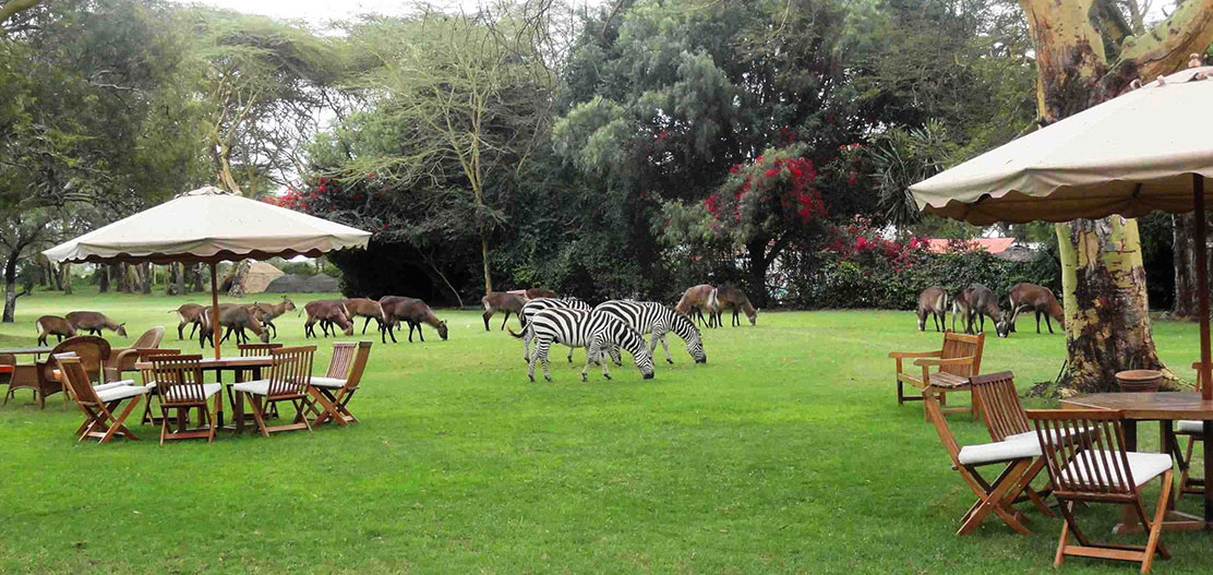 Customer Reviews:      Lake Naivasha Country Club  in Nairobi