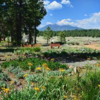 The Arboretum At Flagstaff