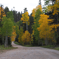 Kaibab National Forest