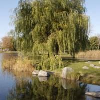 Parc Jarry (Jarry Park)