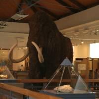 Magyar Természettudományi Múzeum (Hungarian Natural History Museum)