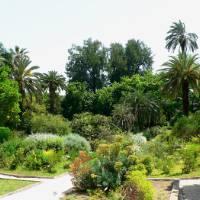 Orto Botanico Dell'Università Di Roma
