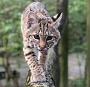 Claws 'N' Paws Wild Animal Park