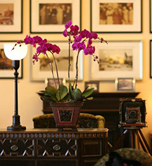 Activities:      Mansion Hotel  in Shanghai