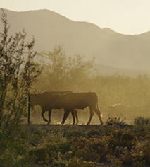 Local Attractions:      White Stallion Ranch  in Tucson