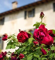 Local Attractions:      Hotel Villa Cipriani  in Asolo