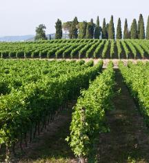 Event Calendar:      Villa del Quar  in Verona
